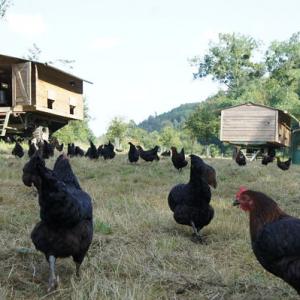 La ferme des cocottes, Saint-Maclou Eure