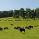 parc canadien, rêve de bisons