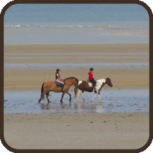 equitation, sport, activités, loisirs, calvados