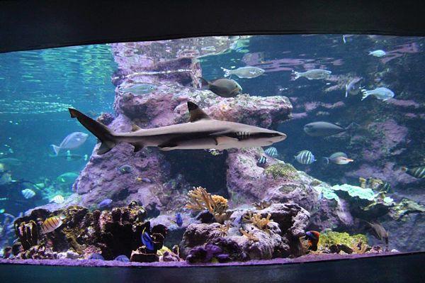 aquarium la cité de la mer cherbourg
