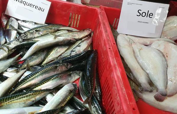étal poisson sachal'eo port guillaume dives-sur-mer
