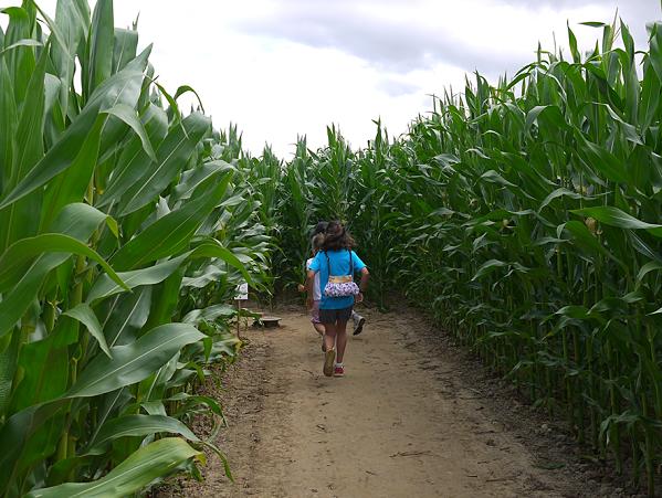 labyrinthe maïs honfleur