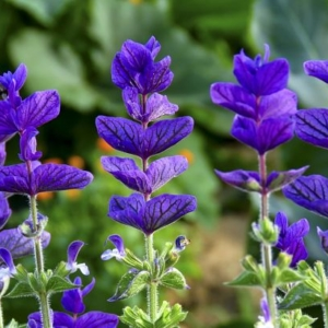 culture florale