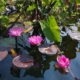 jardin d'eaurus