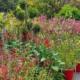 jardinerie cap vegetal