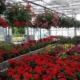 horticulture lepetit